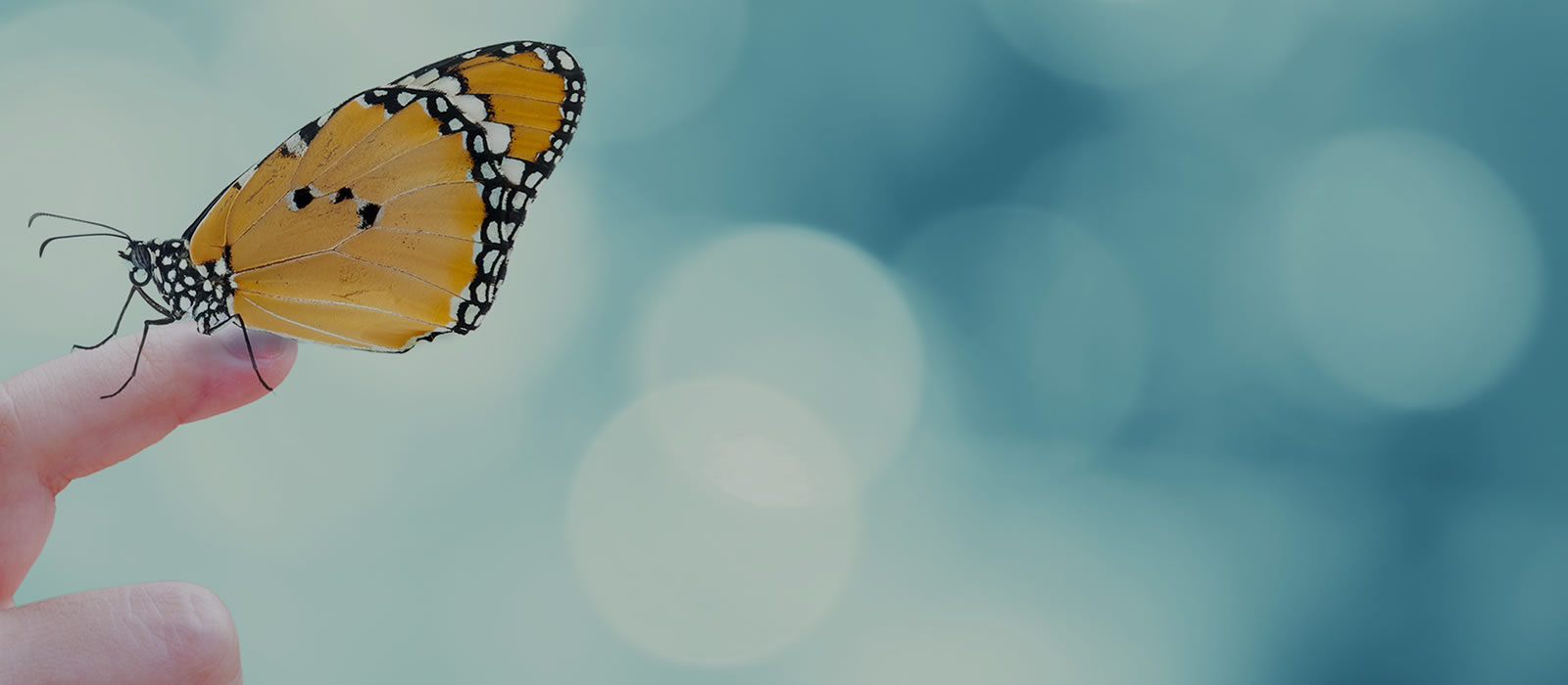 Banner image for Annual Biology Butterfly Show